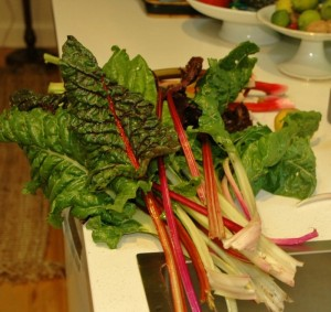 rainbow chard freshly picked from our garden